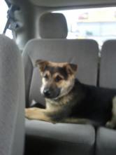 zap in the car