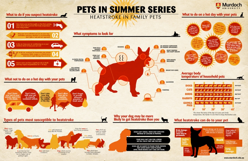 pets in summer